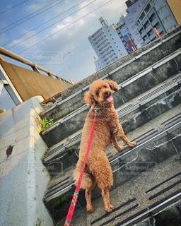 建物の前に座っている犬の写真・画像素材[3502856]