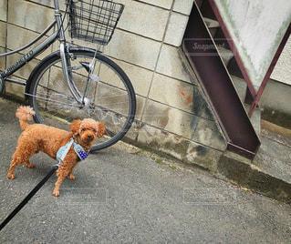 犬を連れ、ひもでつながれる自転車の写真・画像素材[3504881]