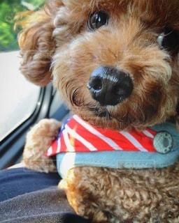 帽子をかぶった犬の写真・画像素材[3561211]