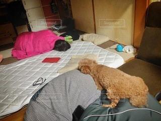 ベッドに座っている犬の写真・画像素材[3599506]