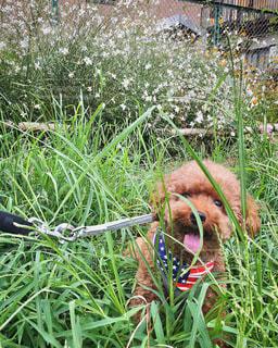 緑の草の上に横たわる犬の写真・画像素材[3643988]