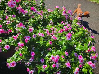 紫色の花で満たされた花瓶の写真・画像素材[3730862]