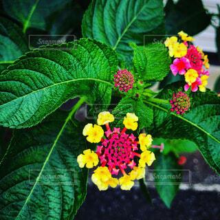 花のクローズアップの写真・画像素材[3736119]