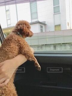 窓の前に座っている犬の写真・画像素材[3742330]