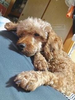 ベッドに座っている犬の写真・画像素材[3749253]