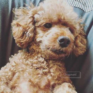 犬のクローズアップの写真・画像素材[3803625]