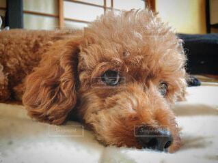 犬のクローズアップの写真・画像素材[3803627]