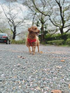 春ですね桜キレイですねの写真・画像素材[4304579]