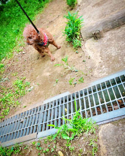 散歩 排水溝 嫌い 画像 画像素材 写真 素材の写真・画像素材[4407847]