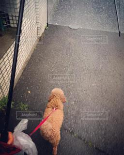 雨 散歩 画像 素材 写真の写真・画像素材[4429171]