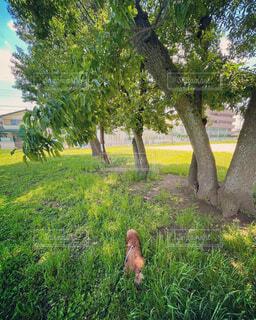 緑 埋まる 草むら 画像 素材 写真の写真・画像素材[4466022]