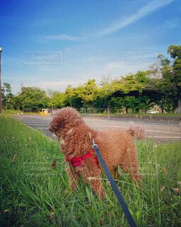 公園 こっち見て 画像 素材 写真の写真・画像素材[4482449]
