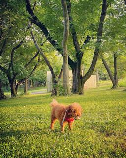 草むら 佇む 画像 素材 写真の写真・画像素材[4482454]