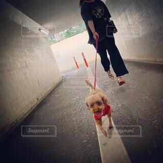 白線 散歩 トンネル 画像 素材 写真の写真・画像素材[4524416]