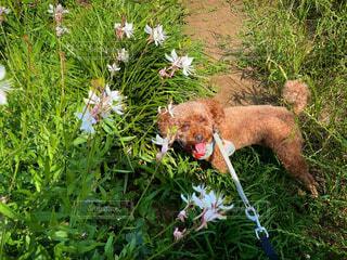 花 葉 自然 画像 素材 写真の写真・画像素材[4542073]