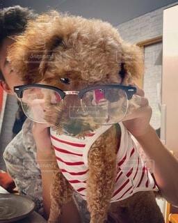 めがね ワンコ 犬服 画像 素材 写真の写真・画像素材[4710168]