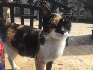 猫の写真・画像素材[98675]