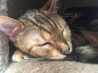猫の写真・画像素材[2621305]