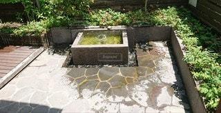 きれいな湧き水の写真・画像素材[2563449]