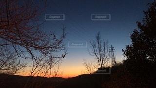 夕焼けのある木の写真・画像素材[2544327]