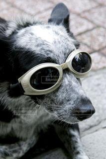 犬の写真・画像素材[134462]