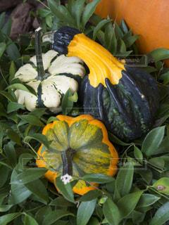 野菜の写真・画像素材[137708]