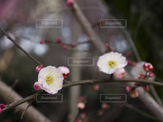 自然の写真・画像素材[137740]