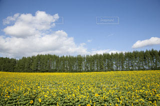 自然の写真・画像素材[143576]