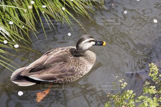 鳥 - No.145015