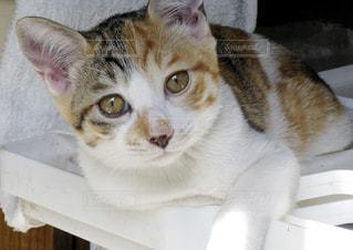 猫の写真・画像素材[150922]