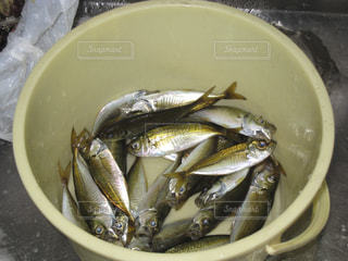 No.150928 魚