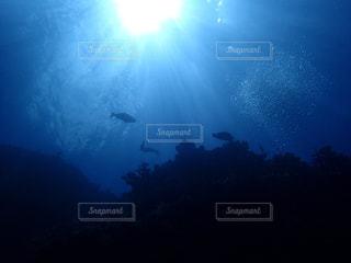 海の底から空を見上げて②の写真・画像素材[2546506]