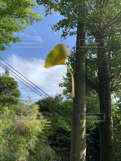 森の木の写真・画像素材[2550068]