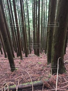 森の木の写真・画像素材[2551969]