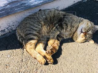 地面に横たわっている猫の写真・画像素材[3058544]