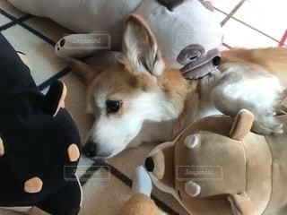 犬の隣にたくさんぬいぐるみの写真・画像素材[2549019]