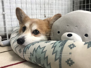 犬の写真・画像素材[2622639]