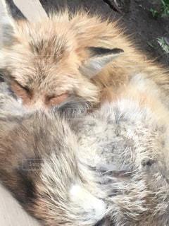 猫の写真・画像素材[140848]