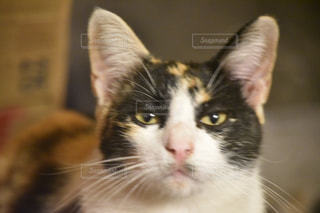 ネコの写真・画像素材[373019]