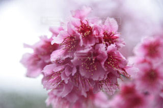 春 - No.377667