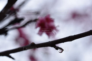 春 - No.388756