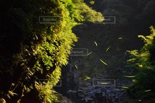 高千穂の写真・画像素材[571671]