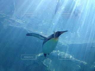 ペンギン - No.105961
