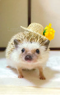 小さな茶色の動物の写真・画像素材[1224350]