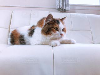 猫の写真・画像素材[2568300]