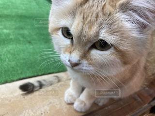 猫のアップの写真・画像素材[3980428]