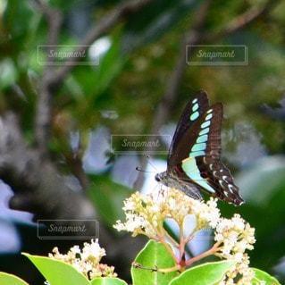 自然の写真・画像素材[110211]