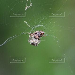 クモの写真・画像素材[110623]