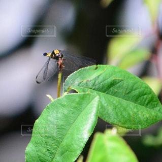 昆虫の写真・画像素材[110626]