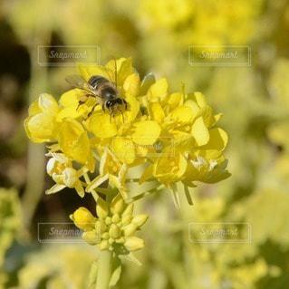 花の写真・画像素材[110681]